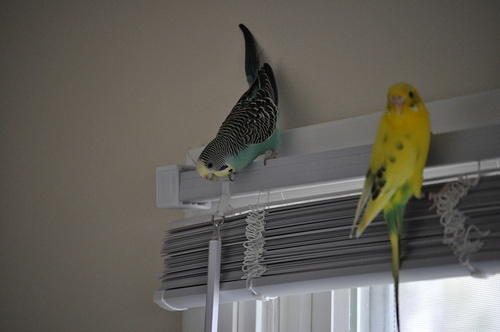 Belle and Sparty have wings grown out now, and they love to fly and explore