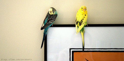 Belle and Sparty perching on artwork