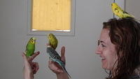 Jessica with the parakeets